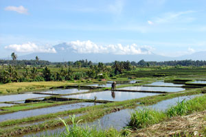 Bali ricefield landscape with Batukaru mountain in the background
