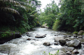 Ayung River in central Bali