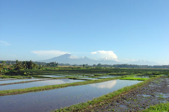 Bali landscape with Batukaru mountain in the background