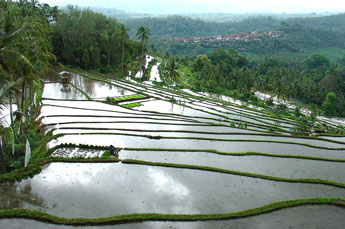 Rice terraces on the way to the North Bali