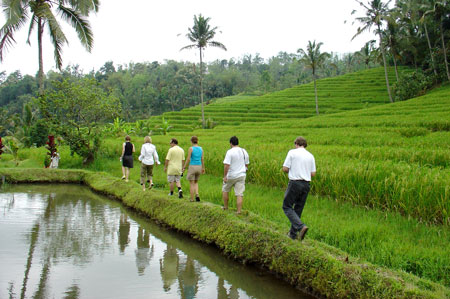 Walking through the rice fields of Bali
