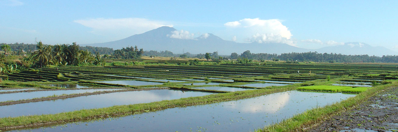 Bali rice landscape with Batukaru mountain in background
